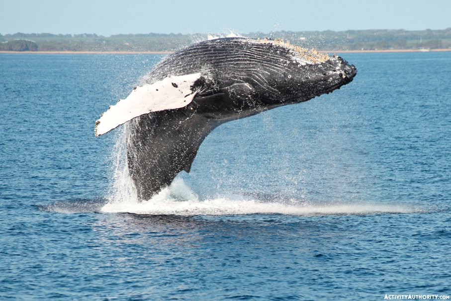 Maalaea Whale watch tour